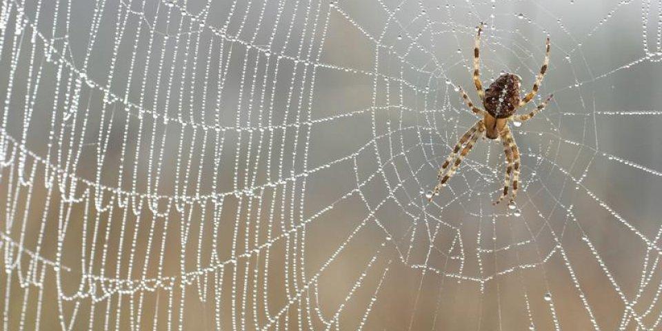 Piqûres d'araignée : 7 remèdes pour être vite soulagé