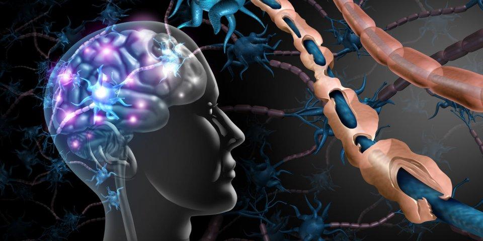 Téléthon : les principales maladies neuromusculaires concernées